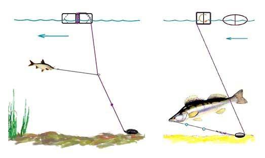 Ловля судака на живца - рыбачок!сайт рыбачок