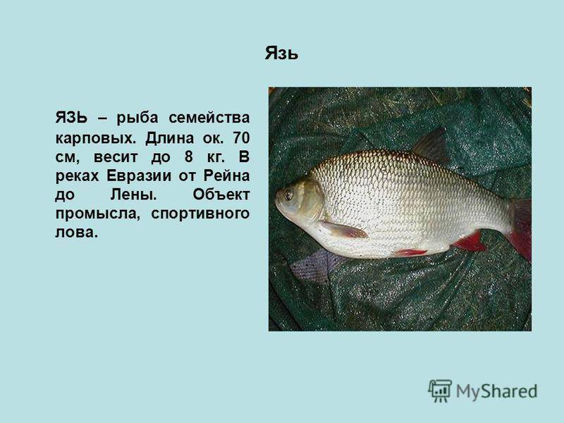 Распространенные болезни аквариумных рыб