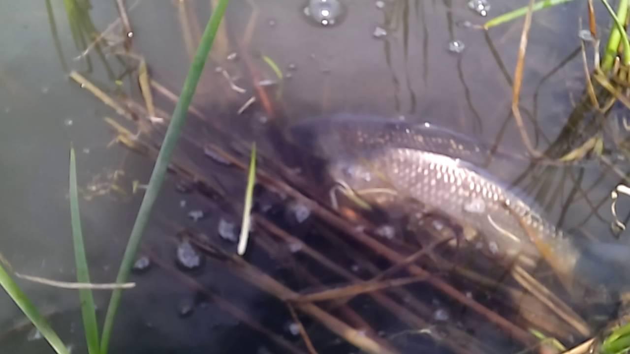 Нерест рыбы — календарь