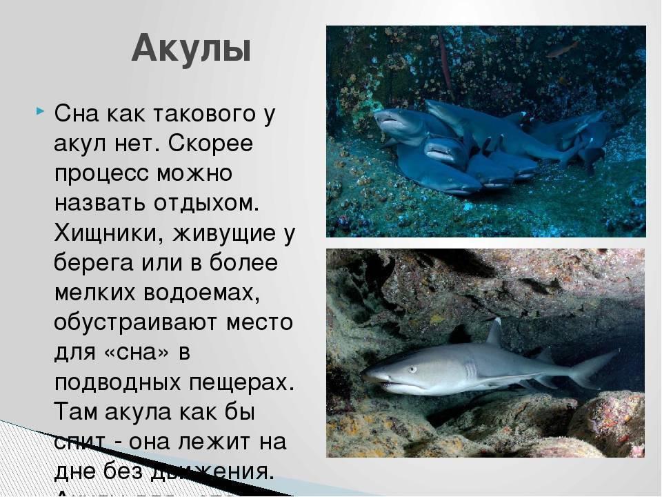 Удивительное о рыбах