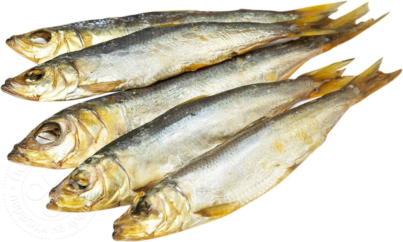 Рыба салака: польза и вред для организма, калорийность, рецепты приготовления в домашних условиях