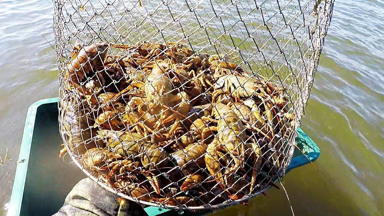 Приманка на рака в раколовку - на какую ловить? самые лучшие рыболовные приманки