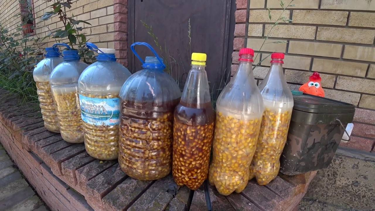 Ловля карпа на кукурузу: техника и приготовление насадки разными способами
