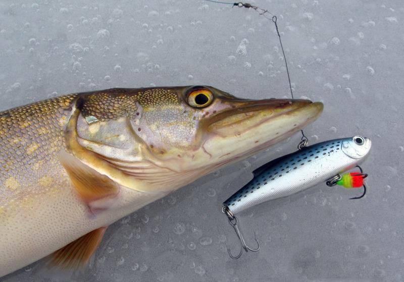 Топ 10 ратлинов на щуку: особенности ловли зимой, преимущества различных моделей