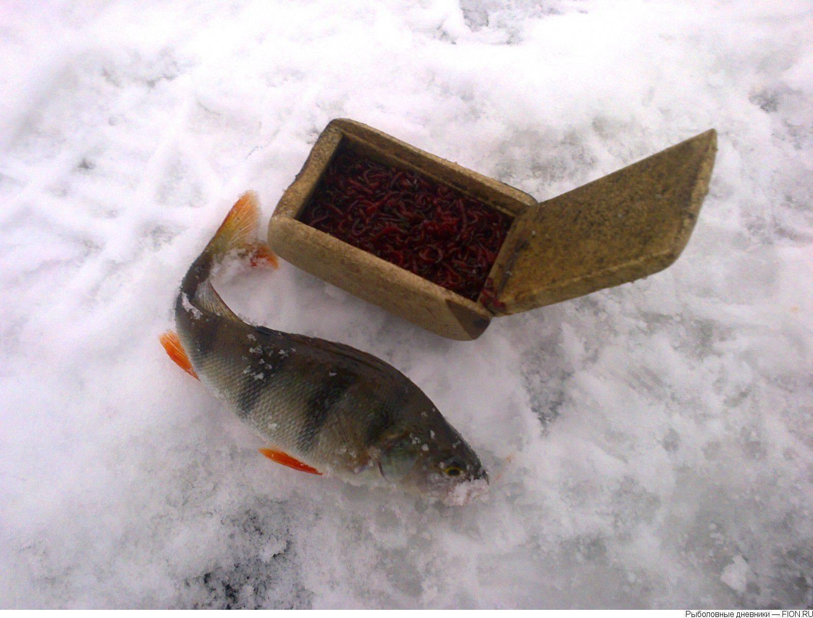 Химкинское водохранилище - читайте на сatcher.fish
