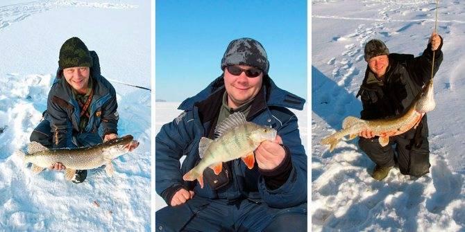 Раттлины для зимней рыбалки — что это и кого ловим