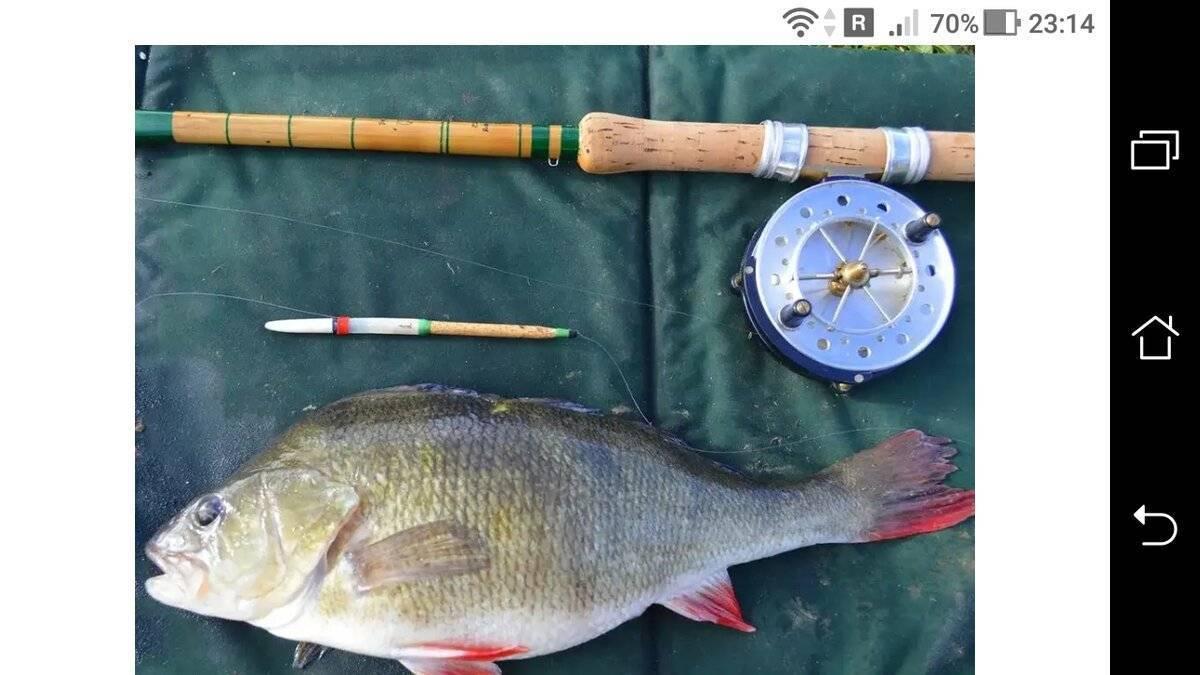 Ловля окуня на спиннинг весной: особенности рыбалки с берега и с лодки, в мае, апреле, марте