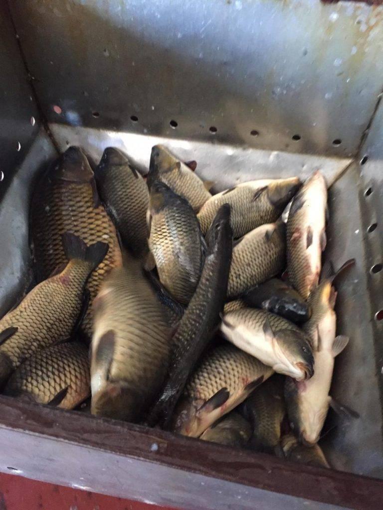 Егорьевский рыбхоз