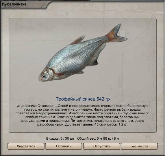 Рыба синец: что собой представляет и среда его обитания, способы питания и размножения, вкусовые свойства