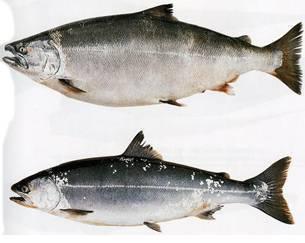 Самые красивые рыбы в мире – топ-20 (+ 40 фото) - большой рейтинг