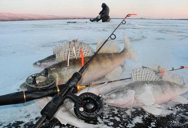 Ловля зимой судака по месяцам, выбор места и снасти, отзывы