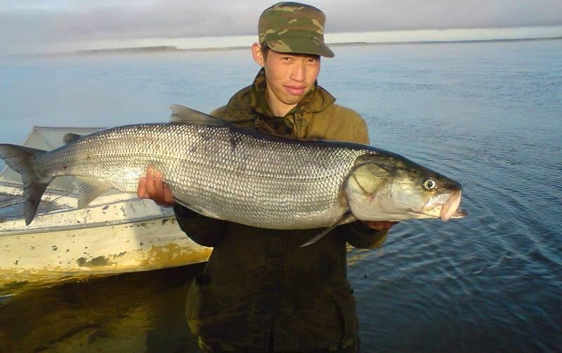 Рыба «Нельма» фото и описание