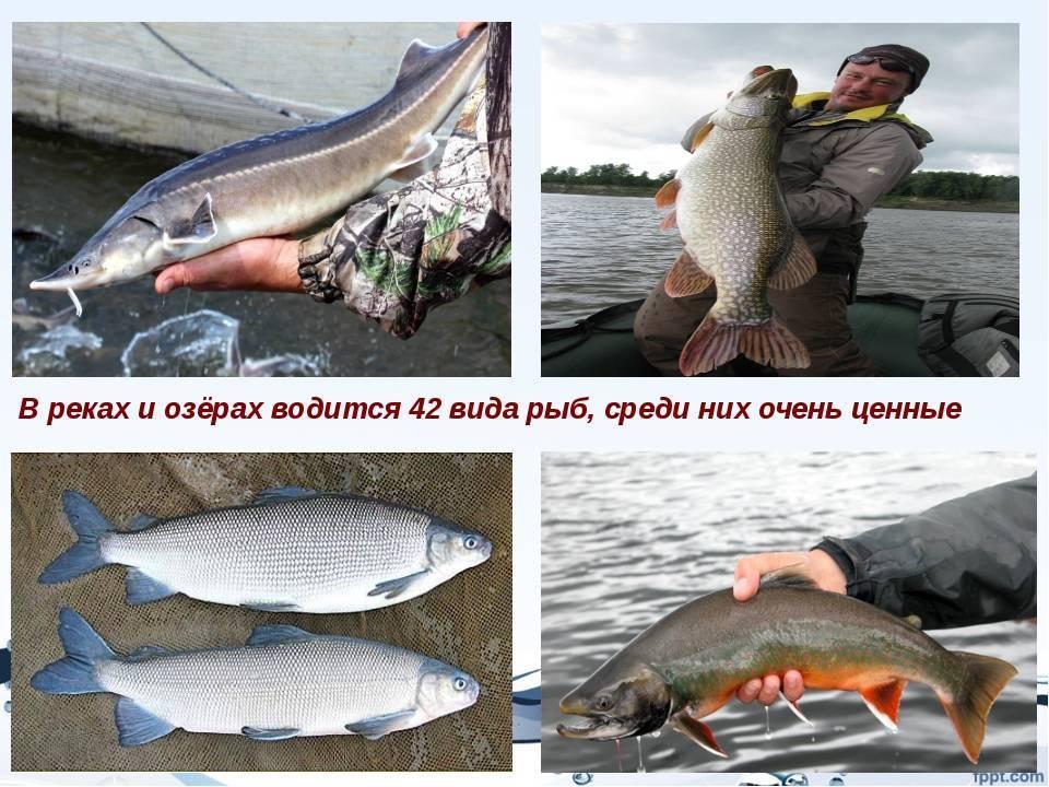 Заславское водохранилище (минское море): рыбалка, форум