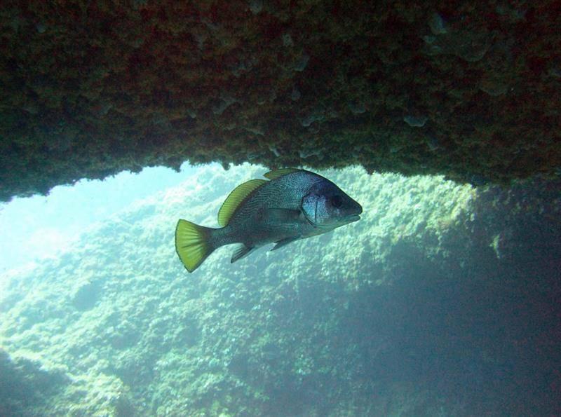 Горбыль: советы по выбору места для ловли, необходимая оснастка и советы профессионалов как словить рыбу (85 фото)