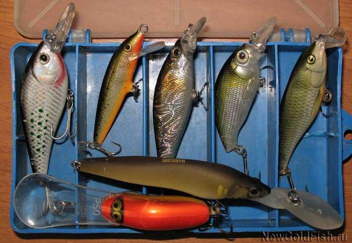 Рыба плотва, особенности, методы ловли