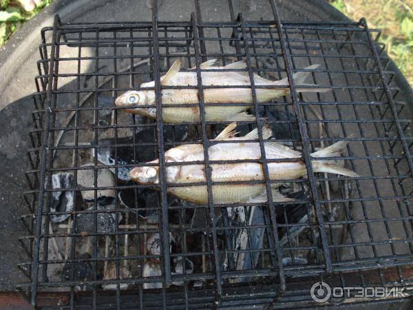 Рыбалка в районе алтая