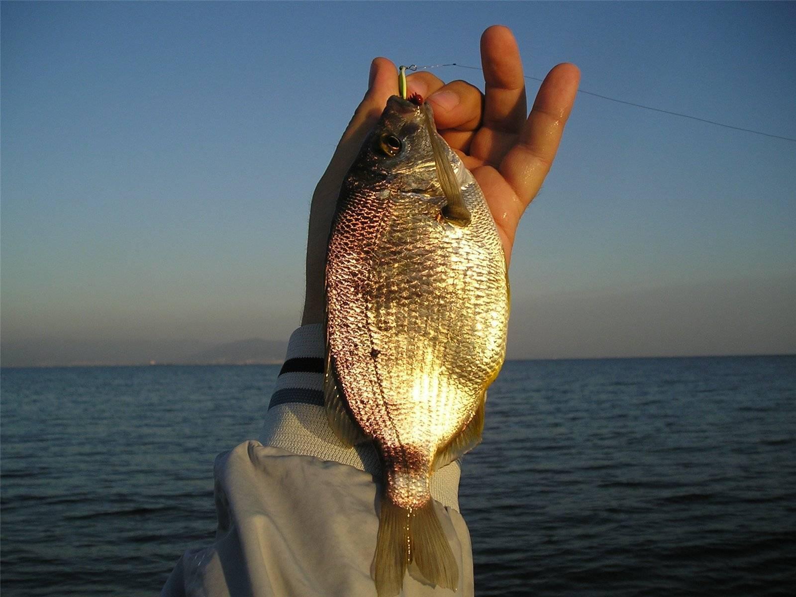 Промысловые рыбы черного моря
