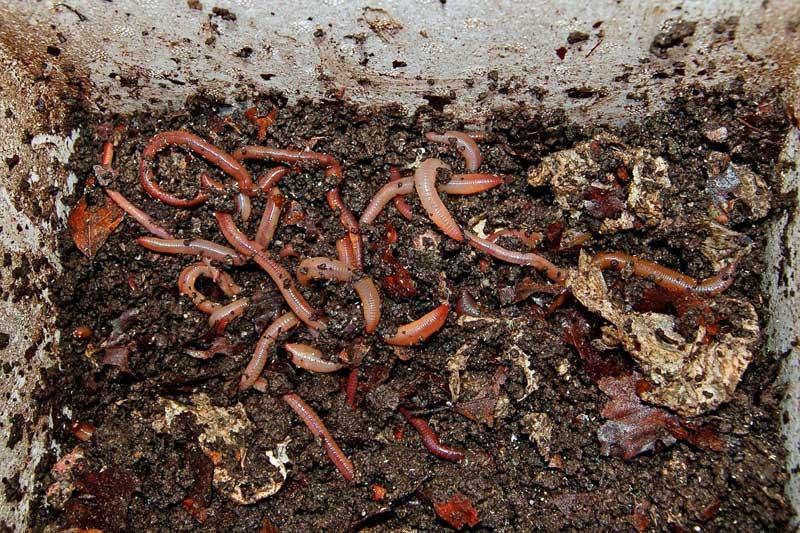 Как хранить червей для рыбалки дома, в чем сохранить живыми в жару