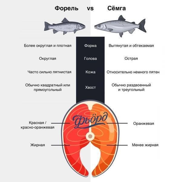 Что лучше – форель или семга (что жирнее, вкуснее и дороже), отличия — рассматриваем подробно