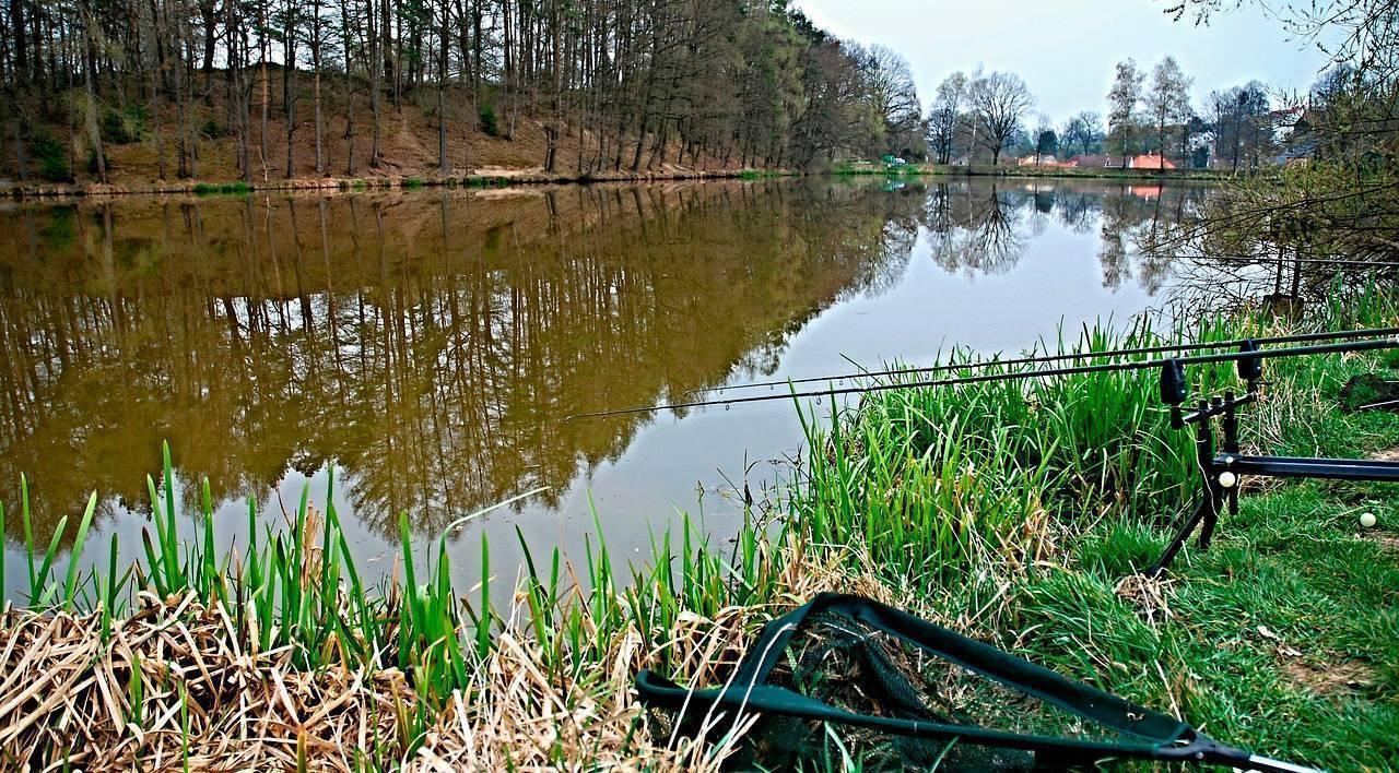 Как обустроить водоем для спортивной рыбалки — практический опыт – reconomica — истории из жизни реальных людей