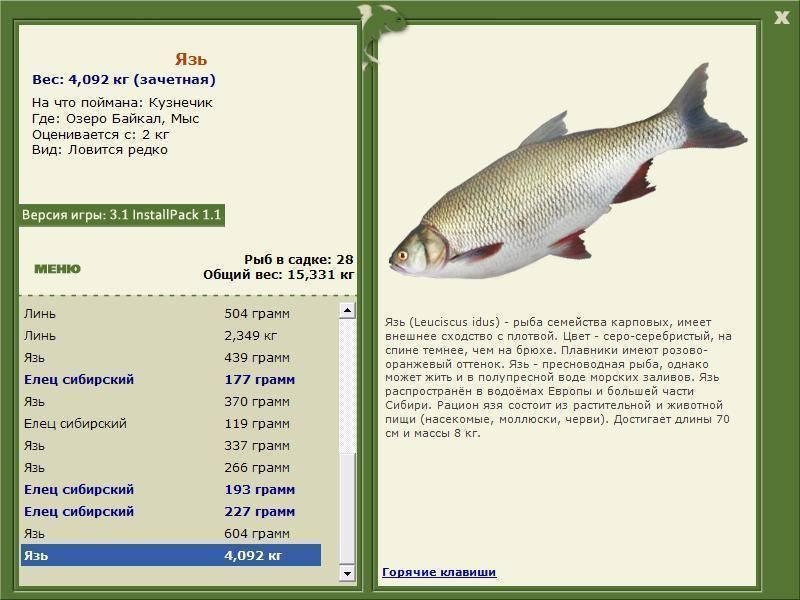 Рыба сорога — фото и описание, места обитания и питание, особенности рыбалки