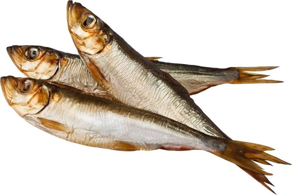 Рыба салака: польза и вред для организма | польза и вред