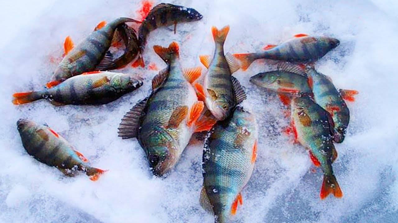Секреты ловли окуня зимой - на рыбалке!