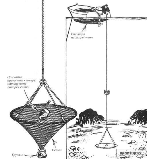 Как ловят креветок - где можно поймать: в чёрном, азовском море и не только