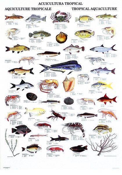 Редкие рыбы: экзотические морские обитатели глубин, яркие тропические речные виды, морской черт
