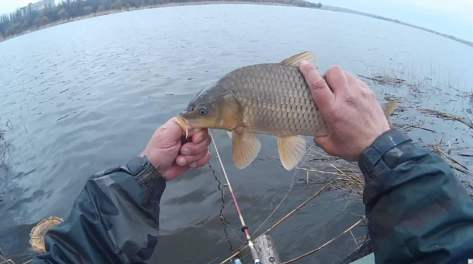 Рыбалка на карпа весной: снасть, наживка и техника