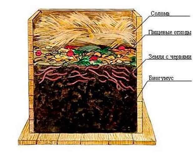 Навозный червь выращивание и разведение дома