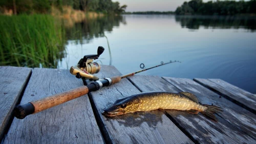 Ловим щуку на озере