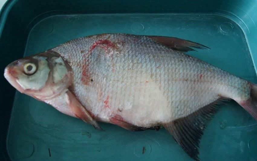 Рыба судак, фото и описание, рецепты, костлявая или нет, цена