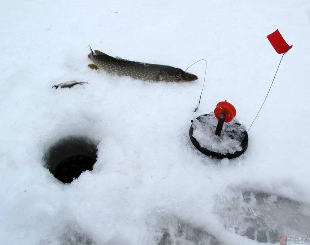 Жерлицы на щуку: секреты ловли зимой, как сделать летнюю снасть своими руками, особенности конструкции и использования в зависимости от сезона