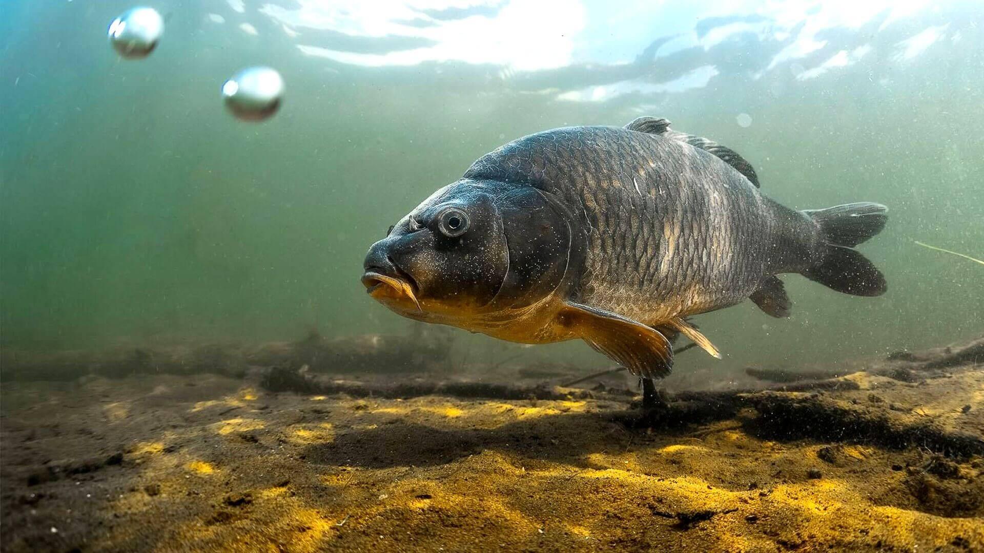 Групер (рыба): описание и рецепты приготовления