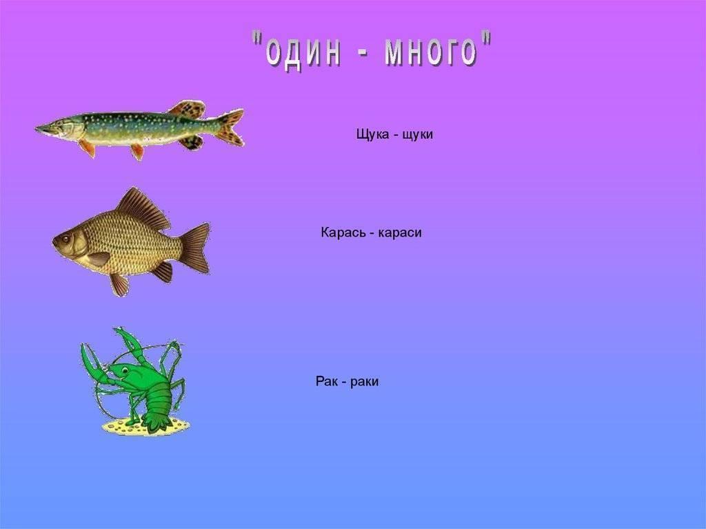 Межвидовые взаимоотношения у рыб. внутривидовые взаимоотношения у рыб