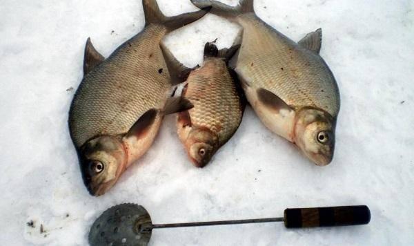 Секреты ловли леща на черта. особенности рыбалки зимой