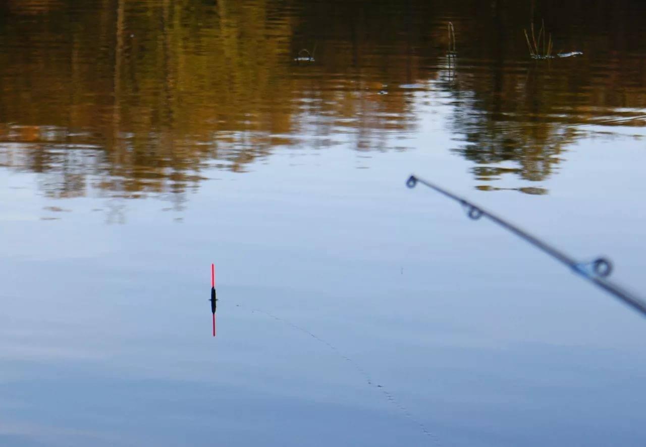 Рыбалка на фидер для начинающих