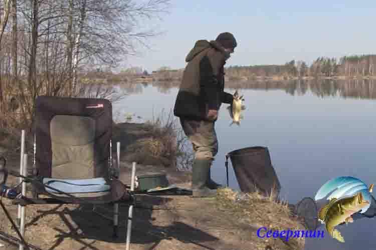 Ловля леща на фидер весной – поиск, тактика и снасти
