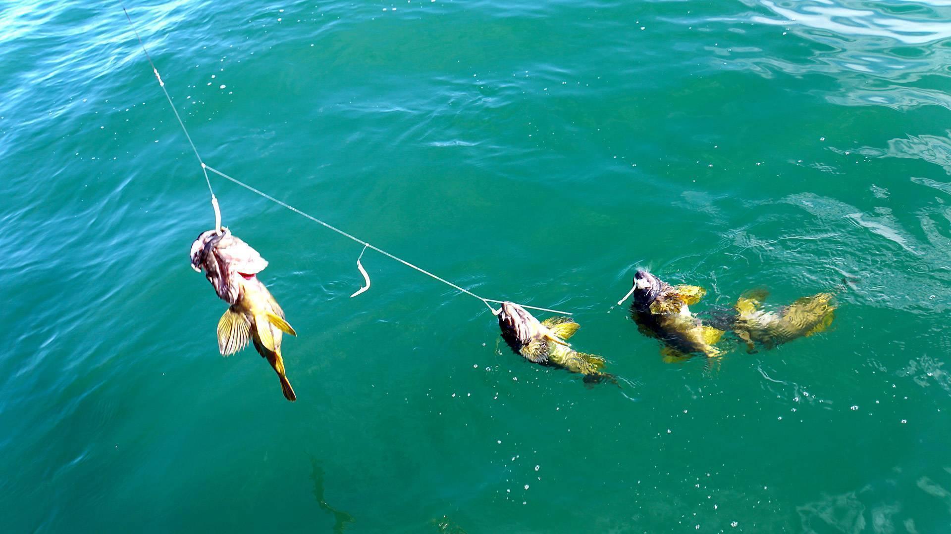 Рыбалка в анапе (морская и речная): как ловить с берега, какая рыба водится в море