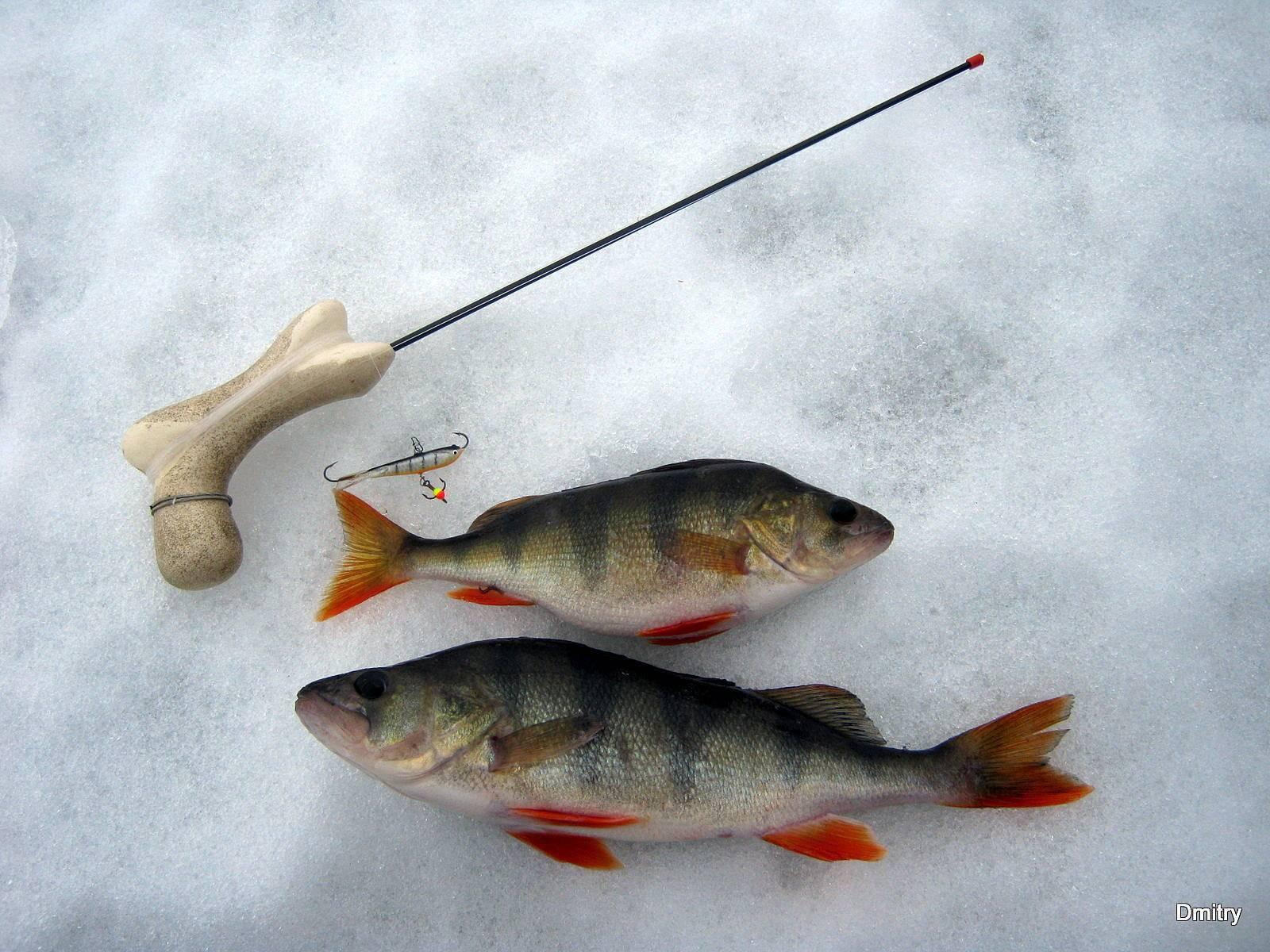 Ловля окуня зимой на балансир: специальная техника и способы
