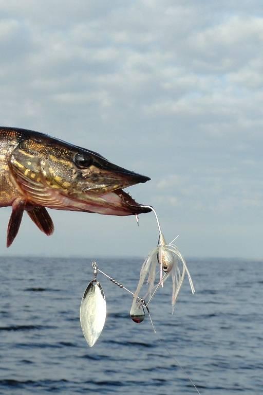 Спиннербейты для щуки техника проводки видео - про рыбалку