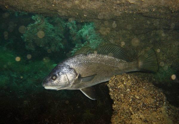 Горбыль - читайте на сatcher.fish