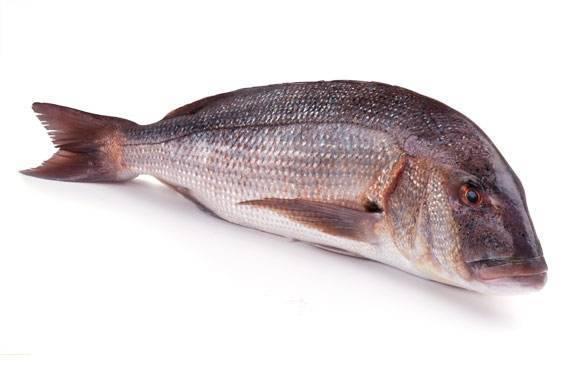 Клыкач (чилийский сибас): фото, приготовление, польза и вред