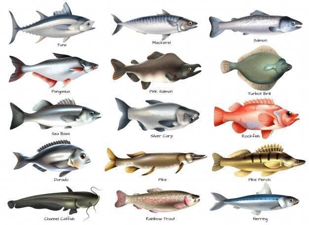 Нежирные сорта рыбы: список с названиями морских и речных видов для диеты, а также таблица калорийности
