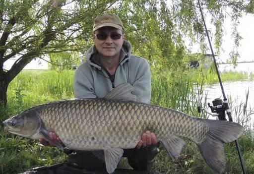 Ловля белого амура в реках, озерах и прудах: на что и как ловить летом и в другое время года, прикормка, снасти и насадки для рыбалки своими руками