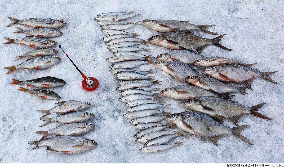 Рыбалка в можайском районе. можайское водохранилище, платная рыбалка, базы отдыха