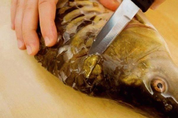 Как почистить карпа от чешуи легко и просто, разделать и удалить плавники