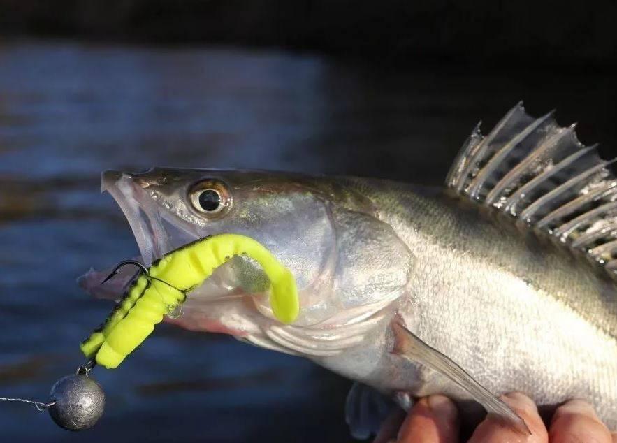 Джиг головка на щуку: виды и особенности, монтаж снасти, выбор приманки, проводки и техника ловли с берега, осенью