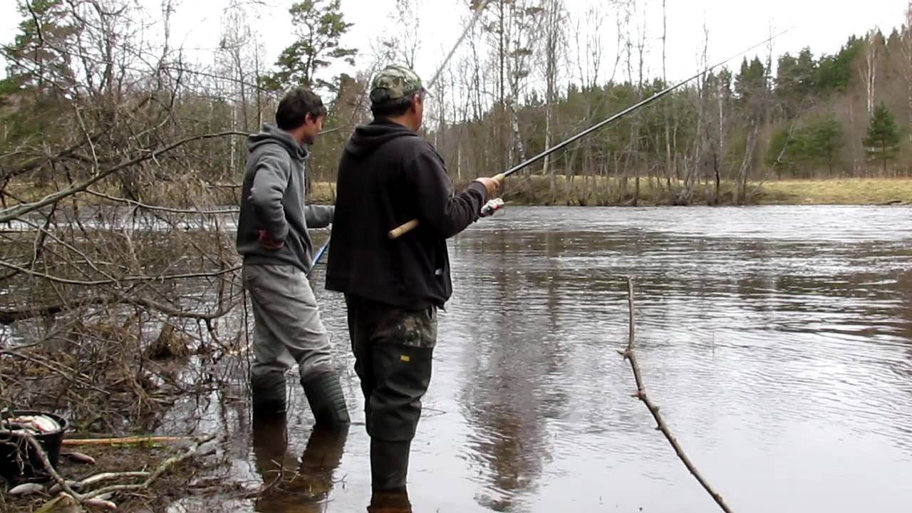 Ловля плотвы на поплавочную удочку